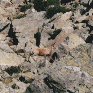 Dans les rocs d'Estibe Aute