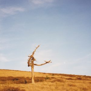 Arbre mort au Portalet - Sommet du mont Aigoual, Portalet - 1565 m