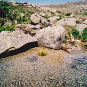 Mère l'Aïgue - Mont Lozère