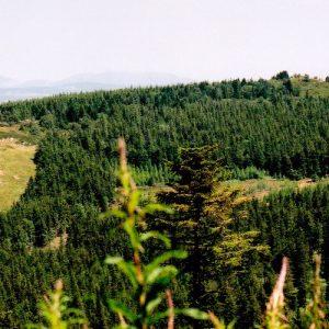 Rocs du mont Mézenc