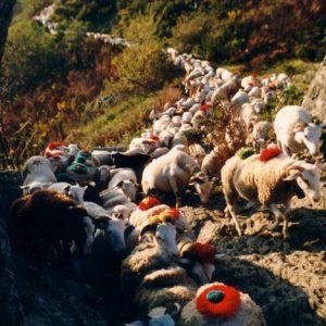 La draille au-dessus de La Roque - Passe étroite pour les brebis