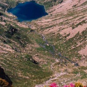 Rhododendrons et lac d'Estom