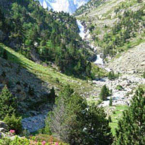 Vallée de Gaube - Rhododendrons le long du sentier (à 1 850 m en amont du lac) qui mène aux Oulettes