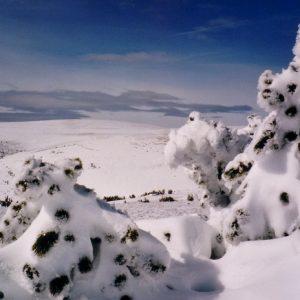 En allant vers le Finiels - Mont Lozère