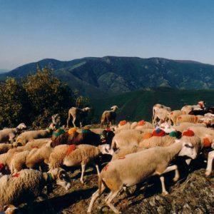 Au-dessus de La Placelle - Face à l'Espérou au mont Aigoual