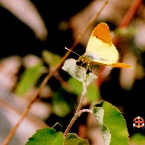 Aurore de Provence - Dans les gorges de la Vis