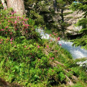 Le gave de Gaube - Haut de la cascade de pont d'Espagne (1 540 m), sur le chemin qui mène au lac... de Gaube