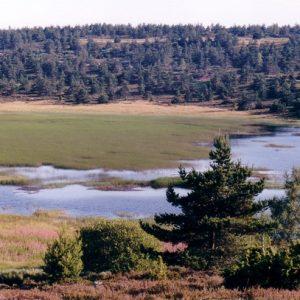 Étang de Barrandon - Vers les Laubies, mont Lozère