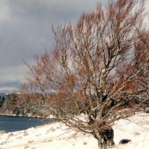 Le Lac des Pises - Montagne du Lingas, mont Aigoual