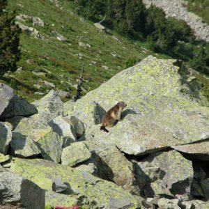 Marmotte... les habitants du lieu sont là...