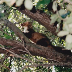 Martre des pins sur sa branche...
