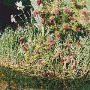 Ruisseau de la Dourbie - composition...