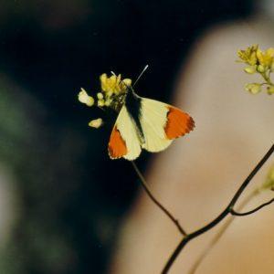 L'aurore de Provence - Dans les gorges de la Vis