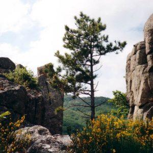 Au Montlouvier - « Le vent souffle, le pin est debout dans le vent, c'est tout ce qu'ils font... » Shunryu Suzuki, Maître Zen du XXe (http://www.babelio.com/livres/Suzuki-Esprit-zen-esprit-neuf/35808/critiques/1239645)