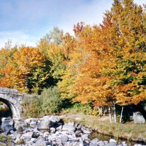 Le Tarn - Au Pont de Mas Camargue