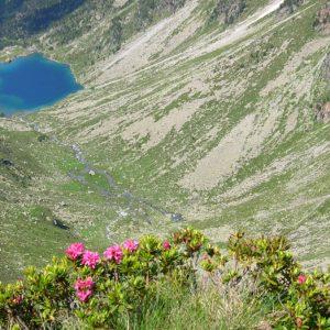Rhododendrons - Vue sur le L. d'Estom, à 2 200 m, de retour du col des Gentianes, fin juin...