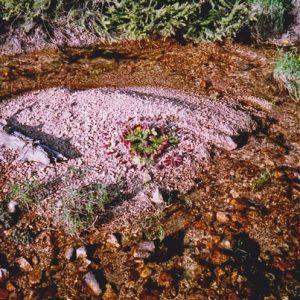 Ruisseau de la Dourbie - composition en nature