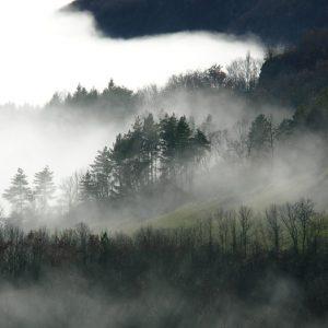bois et prairies s'ennuagent (Montjaux -Aveyron)