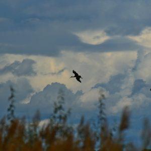 "nuages ""Nimbostratus panus"", Vendres (Hérault)"
