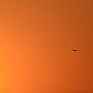 lueurs célestes au lever du soleil à Vendres plage