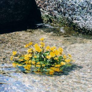Souci d'eau - Aux sources de la Mère l'Aïgue, vers l'Hôpital, dans le massif du Lozère