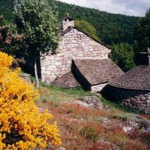 Genêts à Troubat - Sur la route de la Vialasse, massif du Lozère