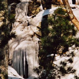 Orgues de glace... À l'arboretum de L'Hort de Dieu (versant sud du mont Aigoual)