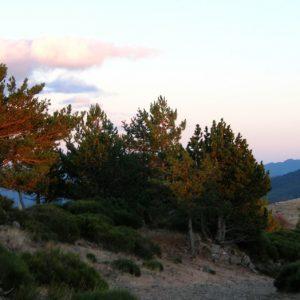 """crépuscule, """"le Pré de Terron"""" Mt Aigoual"""