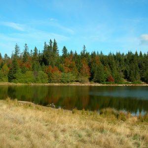 Lac des Pises, rives nord (Mt Aigoual)