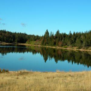 Le Lac des Pises, rives nord - Mt Aigoual