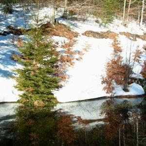 """reflets dans un ruisseau du """"Bois de Miquel"""", Mt Aigoual"""