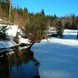 """un ruisseau au """"Bois de Miquel"""", Mt Aigoual"""