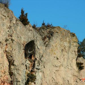 """souche """"pétrifiée"""" de genévrier (haut des Gorges de la Vis - Causse de Bandas, Gard)"""