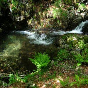 Sources de l'Hérault (Mt Aigoual)