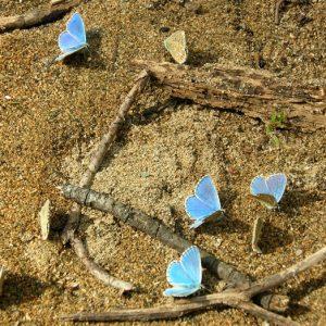 sablés-turquoise (Gorges de la Vis)