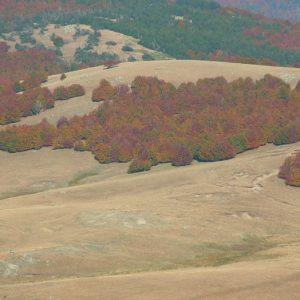 Le Lingas - Massif de l'Aigoual