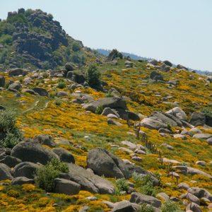 Les Rocs de Montal - Mont Lozère, vers Finiels