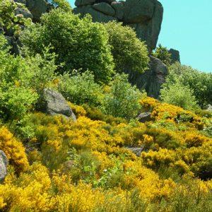 Arrivée aux rocs de Montal - Mt Lozère