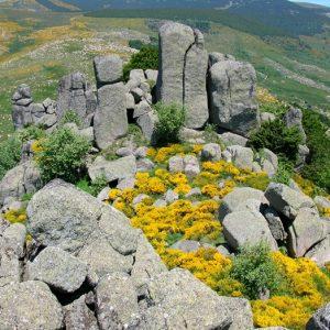 Rocs de Montal - Mt Lozère
