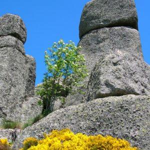 """Rocs de Montal """"totems"""" - Mt Lozère"""