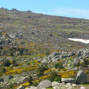 """Mont Lozère au printemps - """"Fond du Dentau"""""""