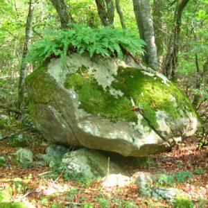 """Roc """"coiffé"""" - Charraute de Bouves, vers le Col des Ares, (alt. 797m.) Pyrénnées (Luchon)"""