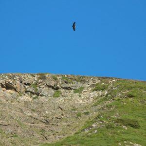 Pic de Bassiques (alt. 2093m.) près du Burat au sud