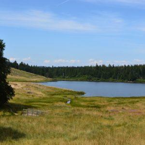 Lac des Pises, rive sud - Massif de l'Aigoual