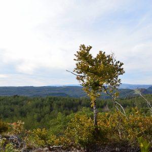 Causse Noir (vers «Le rocher du champignon préhistorique»