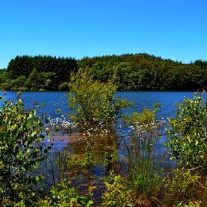 Lac du Laouzas en eau au printemps (Tarn - 81)