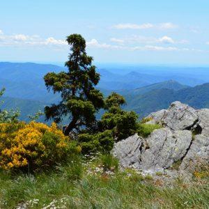 versant sud du Mt Aigoual