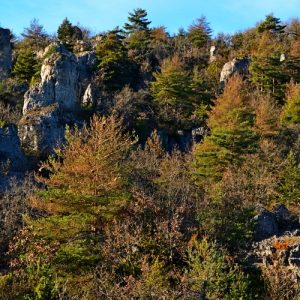 """chaos de rochers aux """"Canalettes"""" - Causse du Larzac"""