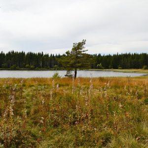 berges nord du lac de Charpal en Lozère
