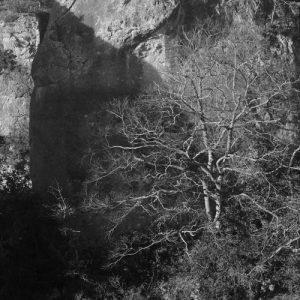 hêtre - Roc Altès (Causse Noir, Aveyron)